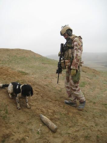 Ernie&nbsp;<SPAN style=&#34;FONT-SIZE: 16px; COLOR: #333333&#34;>var den første norske hunden som fant en veibombe i Afghanistan.</SPAN>