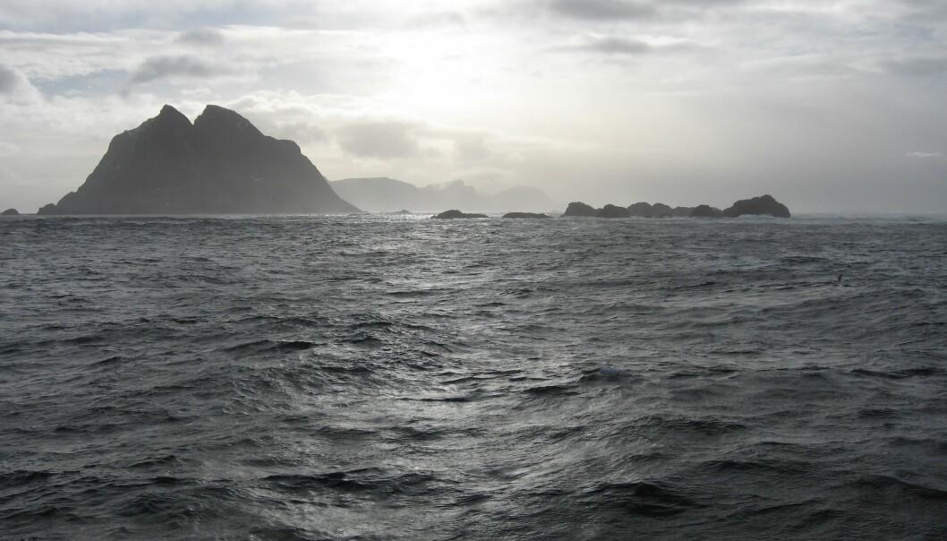 Mosken i Nordland.