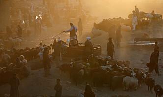 Færre drepes i krig og konflikter