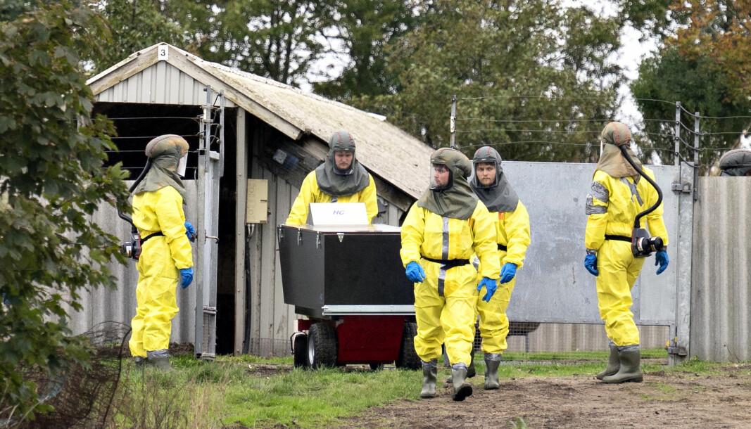 MUTERT VIRUS: Det danske Mattilsynet og Sivilforsvaret startet avlivingen av mink hos en oppdretter i Gjøl for en måneds tid siden. Nå skal hele landets minkbestand avlives for å hindre spredningen av et mutert koronavirus.