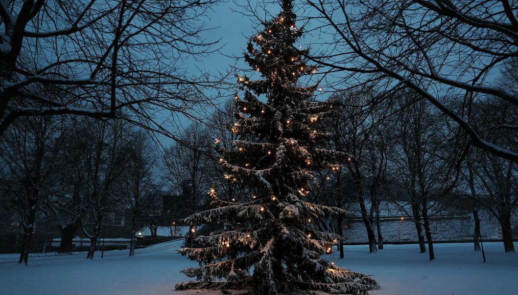 Omstilling trenger ingen begrunnelse. Og det tar oss heller ingen steder, annet enn til nye omstillinger, skriver Harald Høiback i sin julehilsen. Her ser vi et juletre på Akershus festning.