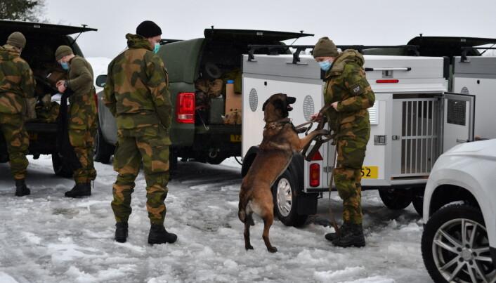 HUNDEPATRULJER: Forsvaret stiller med søkshunder på skadestedet.