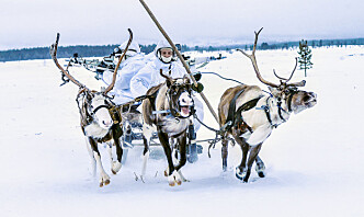 Russland har utvikla høgteknologisk materiell spesielt tilpassa bruk i Arktis. Men eitt framkomstmiddel går aldri av moten.