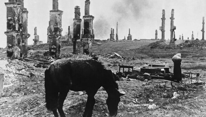 RUINER: En hest går blant ruinene av Stalingrad i desember 1942