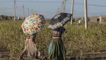 Røde Kors fordømmer seksuell vold i Tigray-provinsen i Etiopia