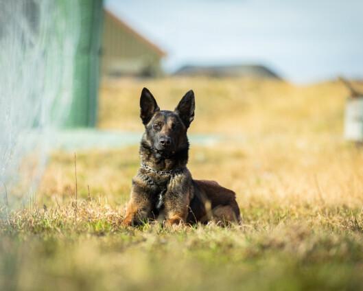 Jack ble Forsvarets godkjente militær tjenestehund nummer 2000