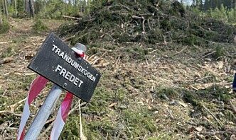 Forsvarsbygg hugget fredede trær i trandumskogen: – Uopprettelig skade