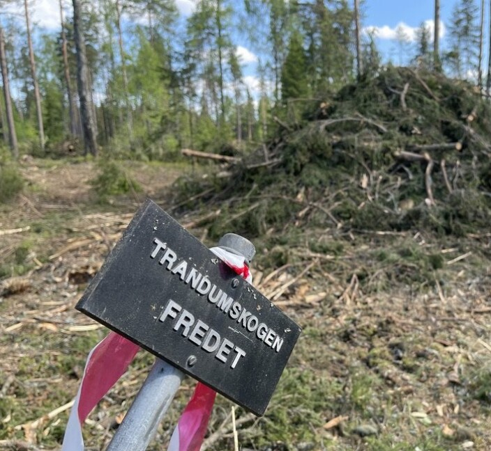 Forsvarsbygg hugget fredede trær:– Uopprettelig skade
