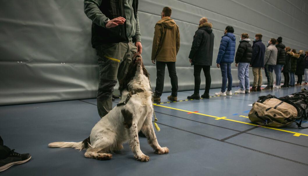 SØK: Hund fra Forsvarets narkotikagruppe gjennomfører søk på rekrutter ved innrykk.