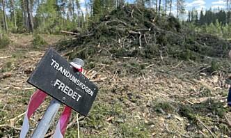 Kommisjon skal granske Trandumskogen-hendelse