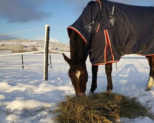 Hest skadet etter overflyvning av jagerfly