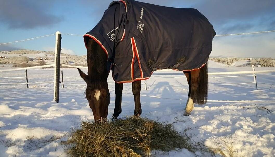 SKADET: Hesten Sandina Gold ble skadet etter et jagerfly passerte over i lav høyde.