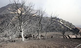 25 soldater døde i skogbranner i Algerie – minst 42 døde totalt