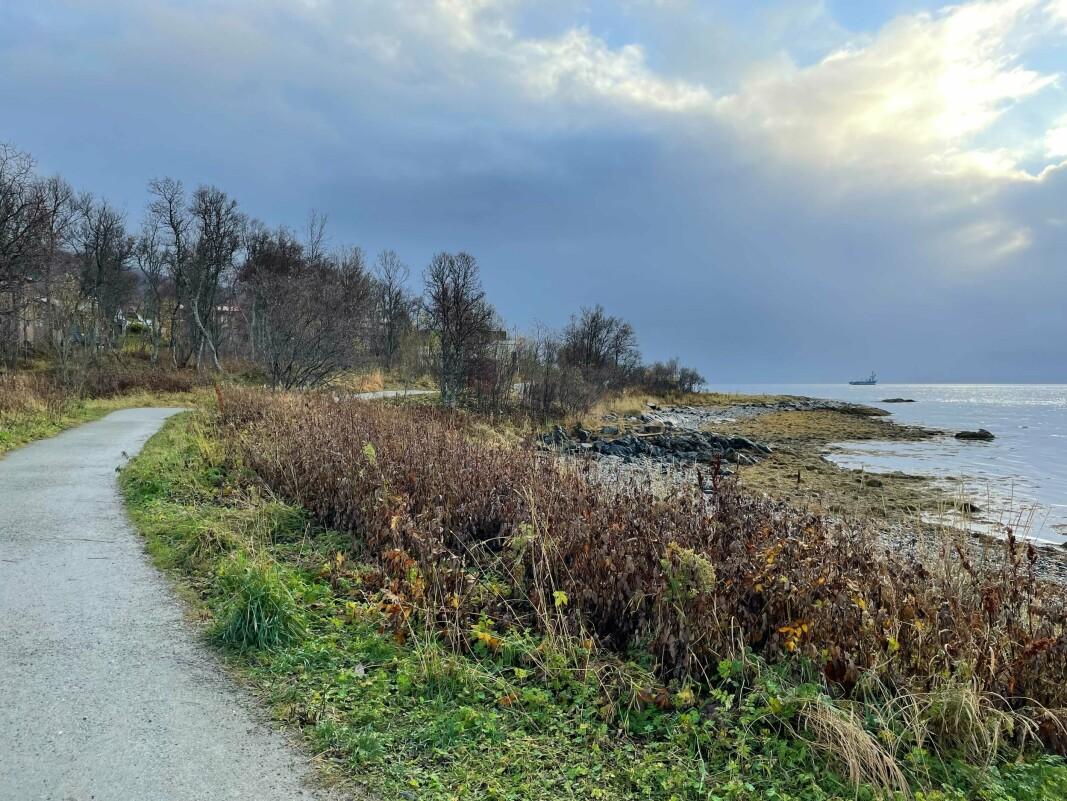 STRANDLINJE: Sydspissen ligger helt sør på Tromsøya og har kyststi som nærmeste nabo.